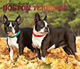 Boston Terriers - For the love of 2019 - 18-Monatskalender mit freier DogDays-App: Original BrownTrout-Kalender - Deluxe