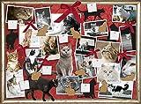 Katzen - Freunde auf Samtpfoten