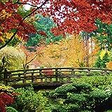 Artland Qualitätsbilder I Glasbilder Deko Glas Bilder 30 x 30 cm Architektur Brücken Foto Grün C3ZX Brücke japanischer Garten