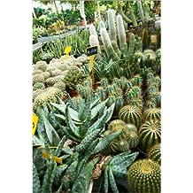 Impresión en metacrilato 40 x 60 cm: Cactus in a pot de Colourbox