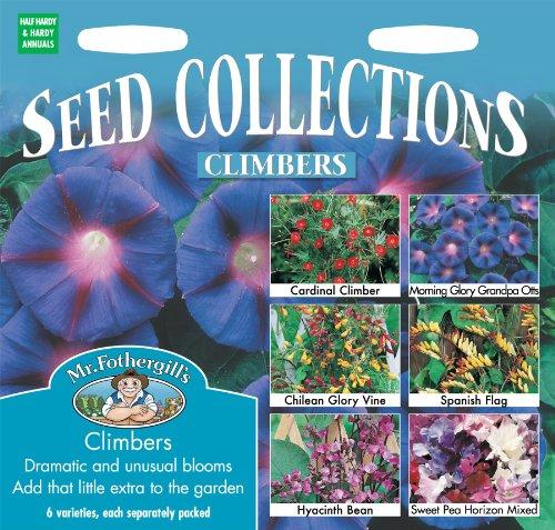 Morning Glory Climber (Mr Fothergills Pilzsporen, Blume, gemischt Kletterer Collection 6 Arten Samen)