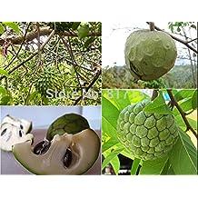 Piante nuova casa Garden 4 semi freschi Soursop guanabana graviola Annona semi Muricata frutta Semillas