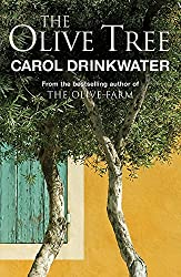 The Olive Tree of Provence: A Personal Journey Through Mediterranean Olive Groves
