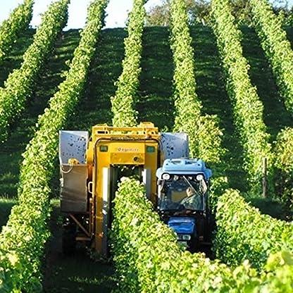 Weingut-Marco-Becker-Rheinhessen-Sptburgunder-Blanc-de-Noir-2014-trocken-6-x-075l-VERSANDKOSTENFREI