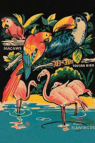 Buyenlarge 0–587–25823–3-g1827Tropical hobbyland-birds Giclée Fine Art Print, 45,7x 68,6cm (Print Giclee Print Tropical)