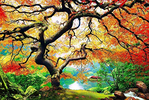 fototapete nachleuchtend PICMA Leinwandbild Nachtleuchtend Baum Ahorn Im Herbst, Wand-Deko Leinwand Groß Wohnzimmer, Fluoreszierende Nachtleuchtende Wanddekoration Modern, 1 x Leuchtbild 60 x 90 cm