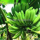 Pinkdose 30 / bag Bananenbaum Pflanzen Obst Bonsai Seltenes Kleiner Mini Hainan chinesische Bananenpflanzen Musa Bonsai Zwerg Basjoo Außen Garten * p: Mehrfarbig