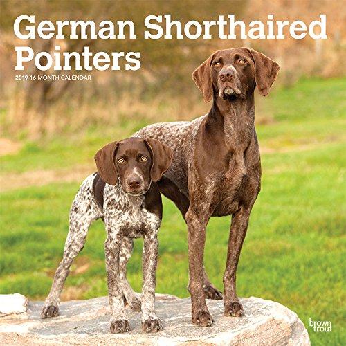 German Shorthaired Pointers International - Deutsch Kurzhaar 2019 - 18-Monatskalender mit freier DogDays-App (Wall-Kalender)