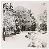 3drose Winter Lane, Schiene Zaun, schneebedeckten Bäumen–us24bfr0115–Bernard Friel–Grußkarten, 15,2x 15,2cm, Set 12(GC _ 91326_ 2)