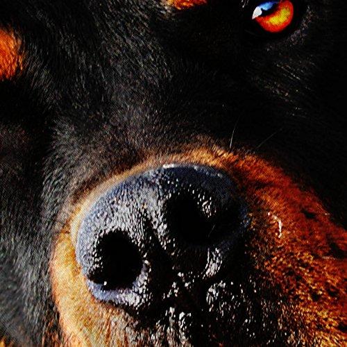 Rottweiler Welpe Tier Hund Schön Hund Damen S-2XL Muskelshirt | Wellcoda Rot