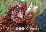 Die Hühner sind los! (Wandkalender 2019 DIN A4 quer): Expressive Bilder von freilaufenden, glücklichen Hühnern (Monatskalender, 14 Seiten ) (CALVENDO Tiere)
