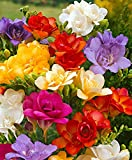 #10: SLRIPL | Freesia Iris | Flower Bulbs (Not Seeds) | Indoor/Outdoor Garden | Mix (Hybrid) | Pack of 5 Pieces