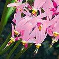 Gärtner Pötschke Götterblume von Gärtner Pötschke bei Du und dein Garten