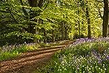 Wallario Premium XXL Vliestapete Blaues Hasenglöckchen im Sommerwald - Größe: 400 x 267 cm