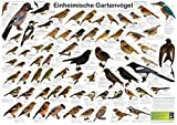 Einheimische Gartenvögel (Planet-Poster-Box)