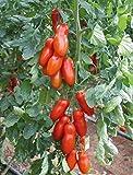 Liveseeds - Rote Tomate in Flaschenform - San Marzano - 20 Samen