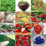 12 paquetes diferentes semillas de fresa (verde, blanco, negro, rojo, azul, gigante, Mini, Bonsai, rojo normal, Pineberry) E3508