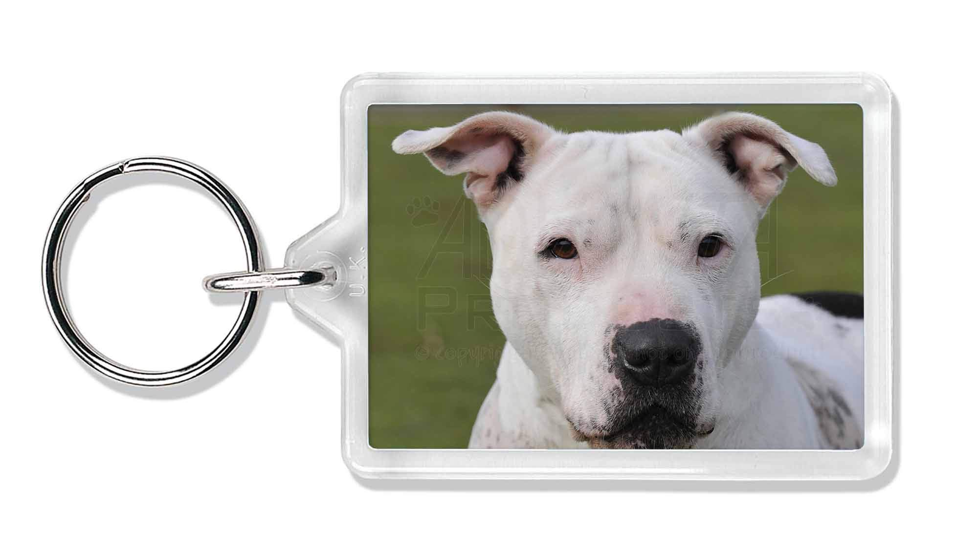 Advanta Group American Staffordshire Bull Terrier Dog Photo Keyring Animal Gift