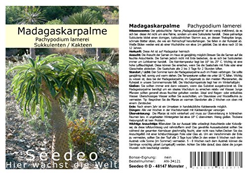 Seedeo® Madagaskarpalme (Pachypodium lamerei) 10 Samen