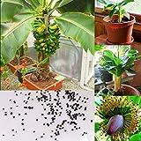 Rosepoem 100 unids semillas de plátano enano frutales al aire libre semillas de frutas perennes para plantas de jardín