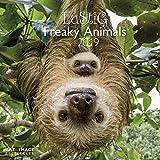 Lustig - Freaky Animals 2020: Art & Image Broschürenkalender