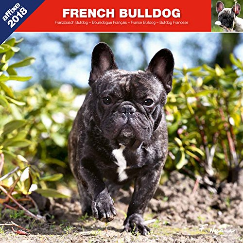 BOULEDOGUE FRANCAIS 2018 - CALENDRIER AFFIXE (FRENCH BULLDOG)