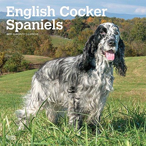 English Cocker Spaniel - Englische Cockerspaniels 2019 - 18-Monatskalender mit freier DogDays-App (Wall-Kalender) -