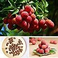 Aprettysunny 10x Süße Litschi Litschi Subtropische Saison Obstbaum Samen Pflanzen GUS von Aprettysunny auf Du und dein Garten
