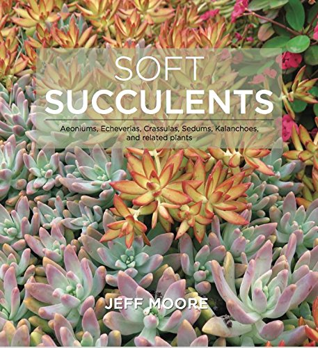 Soft Succulents: Aeoniums, Echeverias, Crassulas, Sedums, Kalanchoes, and Related Plants