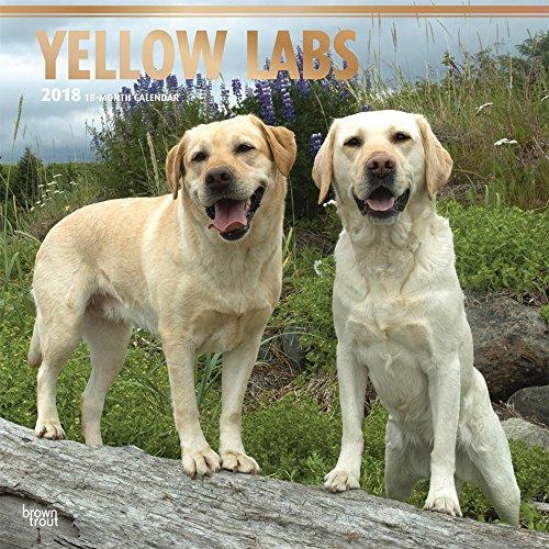Yellow Labrador Retrievers - Weiße Labradore 2018-18-Monatskalender mit freier DogDays-App: Original BrownTrout-Kalender [Mehrsprachig] [Kalender] (Wall-Kalender)