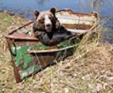 Süß Brauner Bär und Riesig Panda Bären Bereit sich Rahmen - Braun Bär In Boot, Feines Kunstpapier 20x25cm