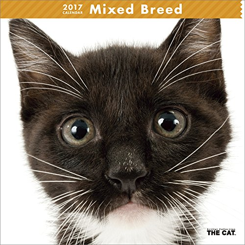 le-chat-calendrier-mural-2017-mixed-breed