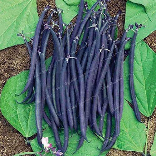 20 pcs/sac de haricots Graines bio délicieux Phaseolus vulgaris plante verte Semences-nutrition Graines de légumes non OGM 2