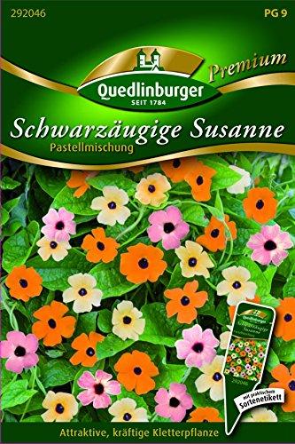 Schwarzäugige Susanne Pastellm - Thunbergia alata QLB Premium Saatgut Blumen einjährig