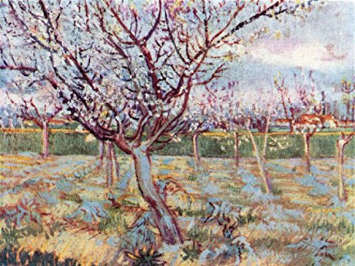 vincent-van-gogh-florecimiento-de-arboles-1888-poster-impresion-artistica-107-x-80cm