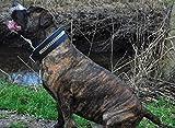 Lederhalsband Rainbow Halsband Leder extra Breit Tysons Hundehalsband gr. Hund M L XL 4 5,5 6,5 Breite (L)