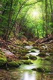 wandmotiv24 Fototapete Vliestapete Fluss im Wald KT460 Größe: 200x260cm Bach Bäume Grün
