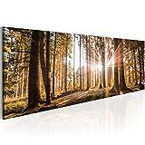 Neuheit! Modernes Acrylglasbild 135x45 cm - 1 Teile - 2 Formate zur Auswahl – Glasbilder – TOP - Wand Bild - Kunstdruck - Wandbild – Bilder - Wald Baum Natur Landschaft c-B-0077-k-d 135x45 cm