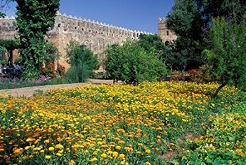 The Poster Corp John & Lisa Merrill/DanitaDelimont - Gardens and Crenellated Walls of Kasbah des Oudaias Morocco Photo Print (60,96 x 38,10 cm)