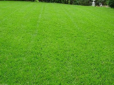 Rasen Sport und Spiel Grassamen Rasensamen Rasensaat Gras von Saatzucht Bardowick bei Du und dein Garten