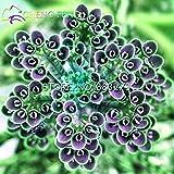 2016 Semillas nueva venta 50pcs Kalanchoe Bonsai rara flor jardín de la purificación del aire de interior del pote Novel Suculentas Plantas nave libre