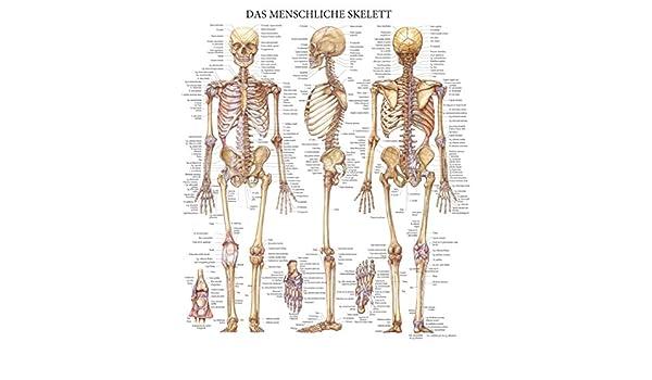 Das menschliche skelett - Quick Reference Chart: Full illustrated ...
