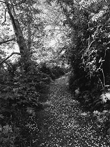 Robert Adams. An Old Forest Road: Ausst.Kat. Galerie Thomas Zander, Köln 2017 - Adams Köln