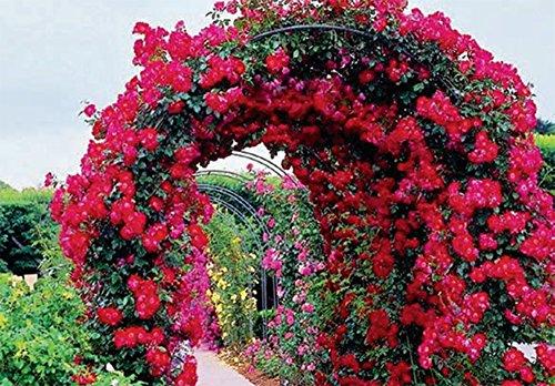 Galileo casa 2403896 arco da giardino supporto per piante for Fiori rampicanti da giardino