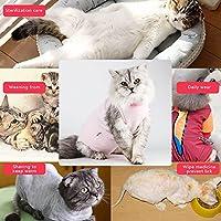 Tiffley Time Chat Gilet de Récupération de Etchemise d'animal Médical Protection Post-Chirurgicale Sevrage Petit