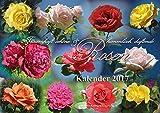 Rosen: Traumhaft schöne und himmlisch duftende Rosen