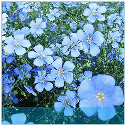 SONIRY 100pcs Gemeinsame Flachs Linum Usitatissimum Natürliche Pflanzenfasern für Home Textile Rohstoffe Pflanzen -