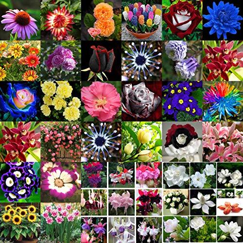 Portal Cool 5# Bell Willow_600Pcs: Mischstil Blumensamen Desert Rose Hibiscus Hausgarten Bonsai Pflanze Dekor -