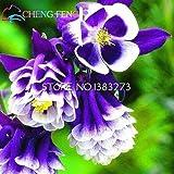 I più venduti * 100pcs Belle Aquilegia Semi Belle semi di fiore nascente tasso del 95% delle piante da giardino per i bambini regalo