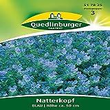 Natternkopf Blau | Höhe ca. 50 cm (Echium plantagineum) Juli – September-